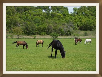 aledo horse boarding,  horse boarding fort worth