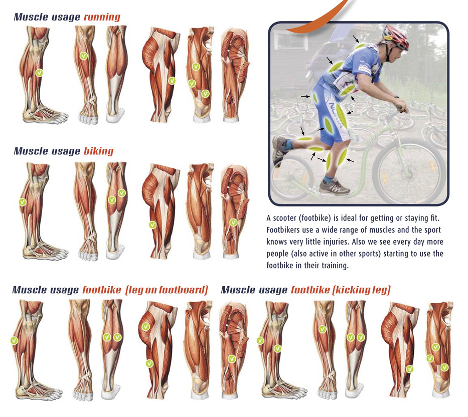 IKSA_2_muscles used in a footbike scoote