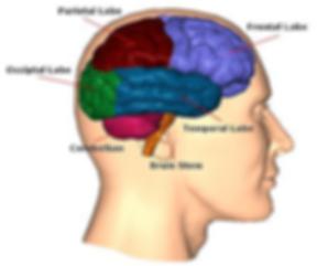 Brain Diagram 2019.png