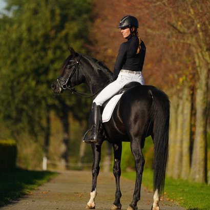 Shayan is under saddle - and he loves it!