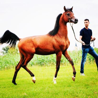 Shahin de Jyar - what a lovely boy he became!