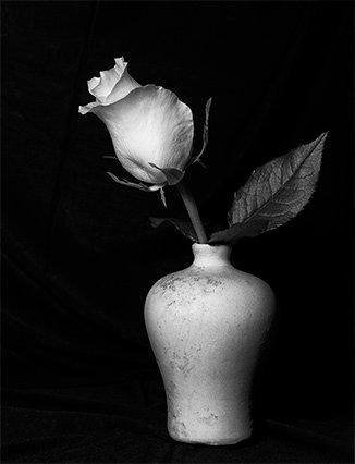 SGC BW Rose in a Vase