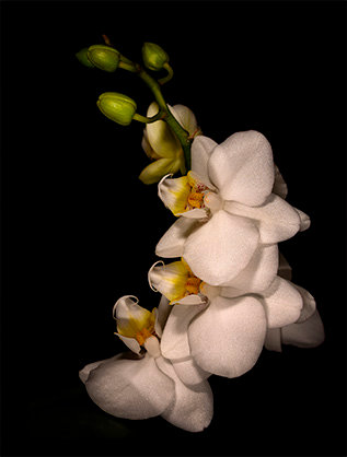 Small Card Orchid 2