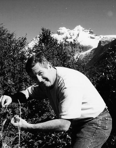 Bob Menendez picking grapes in Chile