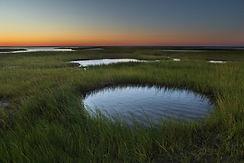 Paine's Creek Shoreline