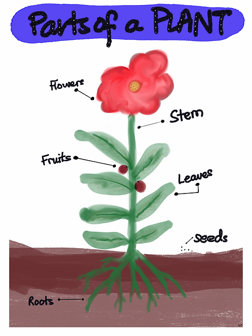 (Free) Parts of a Plant DIGITAL Poster