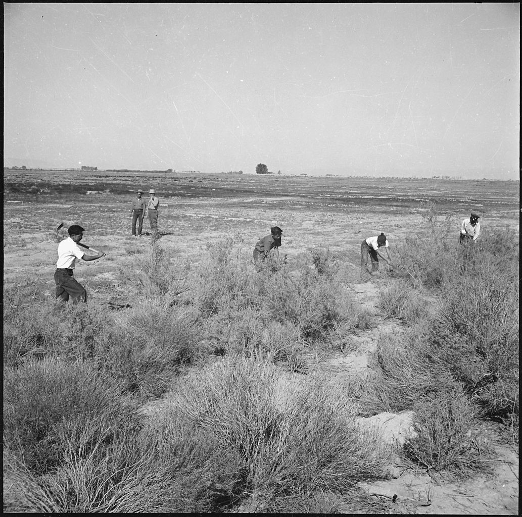Internees clear land for agricultural use, Topaz War Relocation Center, Utah, circa 1944 - 1946.