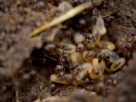 How do you tell if your home has termites?