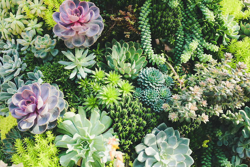 How to create a water-wise garden