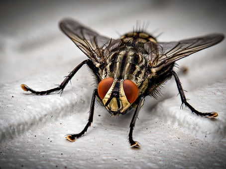 How do you know when pest control has worked?