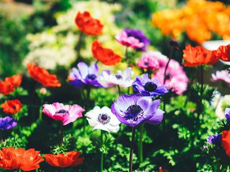 How to bring more colour into your garden