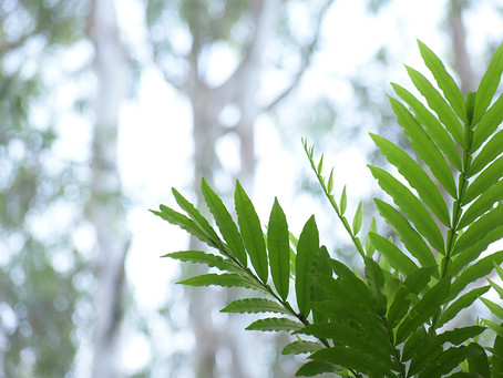 How planting trees can increase the value of your home