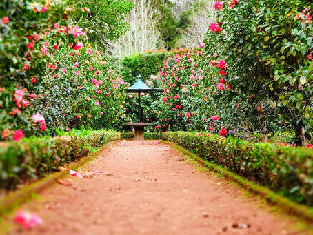Quick and easy checklist for garden maintenance