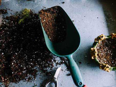 Burying organic food waste can make your garden flourish