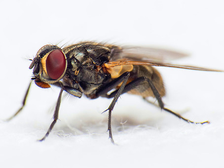 Sure signs of a fly infestation