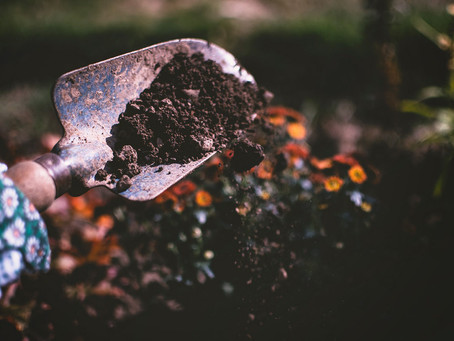 Gardening can boost resilience and well-being