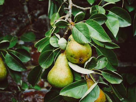 Best trees to plant in a small garden