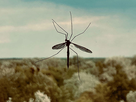 How to eradicate mosquitoes in your home