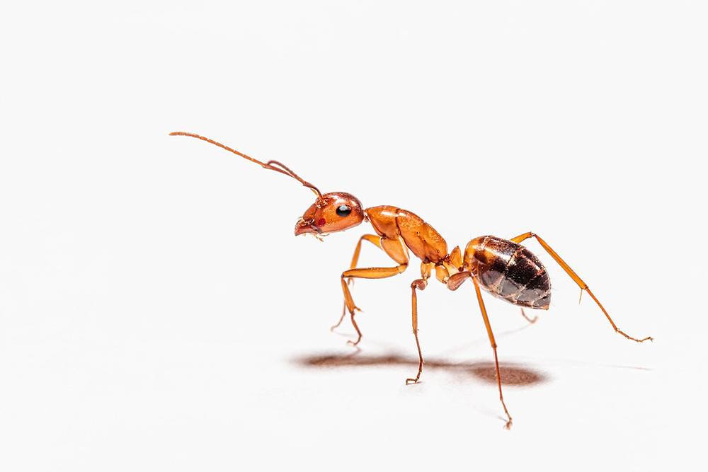 Common facts about pest control