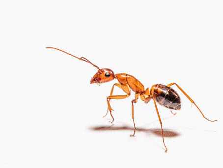 True or false? Common facts about pest control