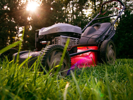 Why opt for IWESCO's gardening services