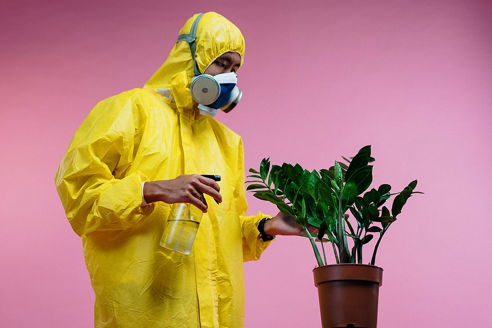 Man in COVID-19 protective gear sanitises an office plant