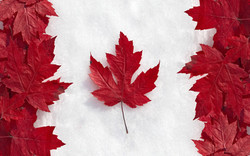 加拿大國旗. 牙周病, 植牙及矯正諮詢服務