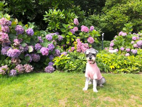 A Fun Trip To Royal Botanic Garden