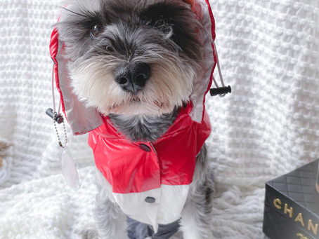 Best 5 Dog Outfits For Winter