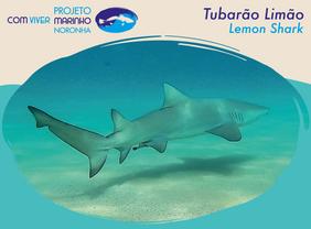 Fotos PCVM - Tubarão Limão.png