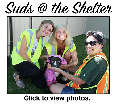 Suds at the Shelter.png