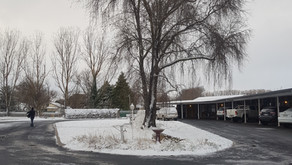 Guyra Snow day