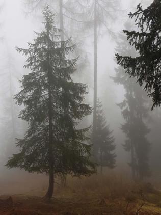 Nebel-ein-seltener-Gast-im-Val-Müstair.j