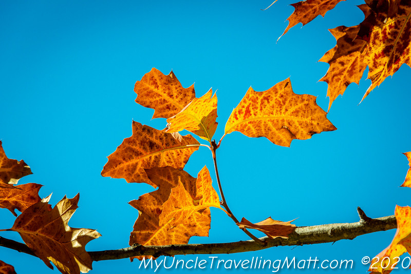 colours autumn seasons