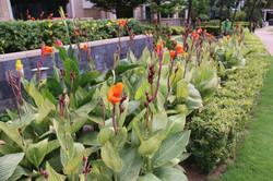 Singapore Landscaping