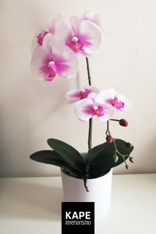 Orquídea Rebeca