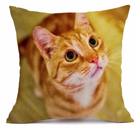 Orange Tabby Cat Cushion Cover 2