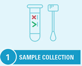 step1_samplecoll.jpg