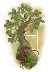 Duir-Oak (Carvalho).jpg