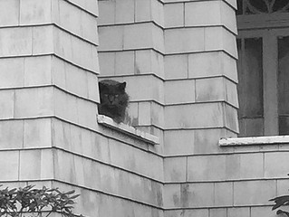 Wicked Cat from Wunderbrook House