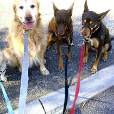 The 4 Amigos