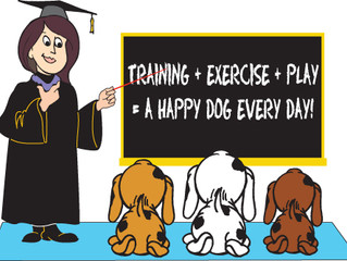 Puppy & Dog Training - let's get moving...