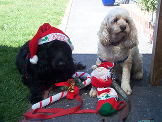 A Merry Christmas to all pet owners & a fantastic year of 2021 ahead for you & your pooches...