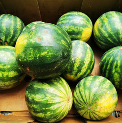 Rescued Food Watermelon.jpg