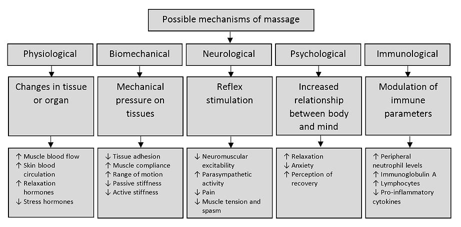 Figure-1-Possible-mechanisms-of-massage.