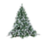 —Pngtree—pine trees_3118088.png