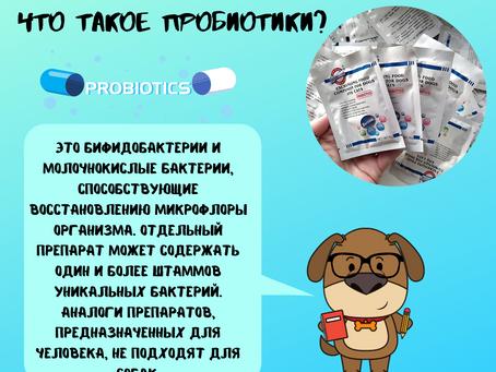 Пробиотик для собак Мы ответим на главные вопросы.