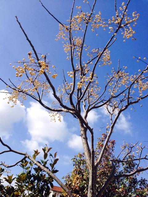 primavera per web.jpg