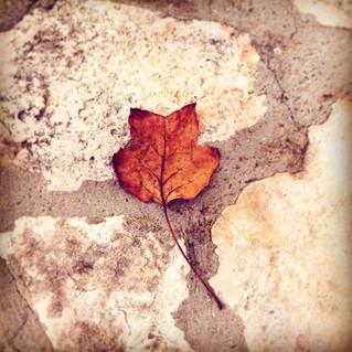Colori d'autunno :) - Autumn colors :)