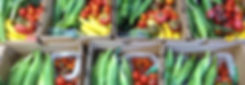 Muddy Springs Farm CSA Moscow Idaho Vegetables
